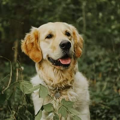 Is CBD safe for pets?